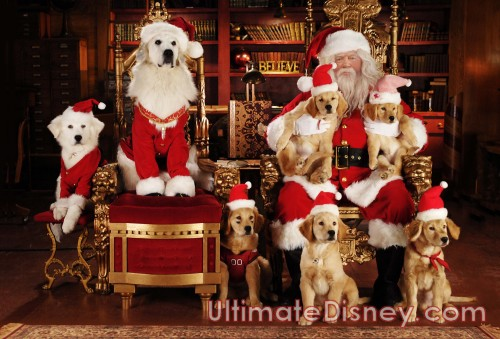 Front Row Left to Right: Budderball, B-Dawg, Mudbud; Back Row Left to Right: Puppy Paws, Santa Paws, Buddha, George Wendt, Rosebud.