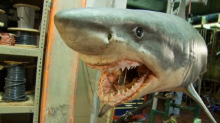 Don't worry, that shark can't eat you. It's only an animatronic.
