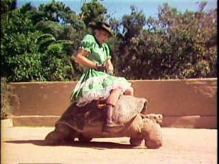 "Per his gal's wishes, Steve Martin rides a turtle in a green dress in ""A Wild and Crazy Guy."""