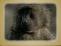 """DisneyPedia"" profiles monkeys and elephants, among other animals seen in the film."