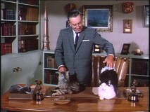 Walt Disney interacts with some cats in a TV introduction to the film.