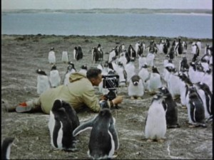 One of Walt Disney's True-Life Adventures filmmakers gets up close and personal with some peculiar penguins, as seen in the DVD's introduction.