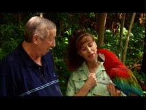 "Roy Disney meets up with Christy and Red, a Greenwing macaw who likes to say ""Hey Baby"" rather than ""Save the Rainforest."""