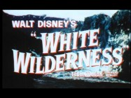 "The theatrical trailer for ""White Wilderness"", oddly in widescreen, promotes the film as an epic of nature, even referring to some animals as villains."