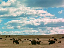 "There's buffalo as far as the eye can see out on ""The Vanishing Prairie."""