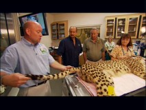 A cheetah check-up is performed in front of two Roy Disneys in one of two featurettes set at Disney's Animal Kingdom.