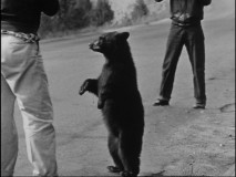 Could you say no to feeding a tiny hungry bear like this in Yellowstone?