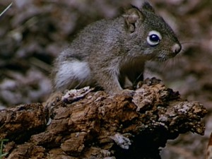 Perri, the world's most famous real-life squirrel.