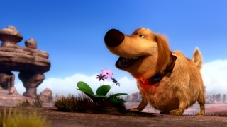 "The short film ""Dug's Special Mission"" opens with the dog stopping to smell this flower."