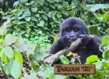 Make a movie set in Africa and you're bound to get an all-expenses paid trip to look at gorillas there.