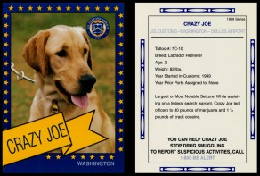 "Crazy Joe is not just the Wishbone"" version of a Tom Sawyer character; it's also the name of a Canine Enforcement Training Center dog, as this 1999 trading card illustrates."