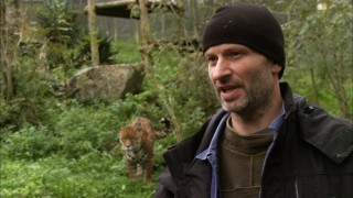 The real Benjamin Mee, bald and British, speaks in front of a wildcat in his real zoo.
