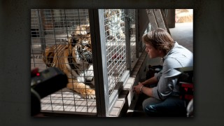 A still from Neal Preston's photo gallery shows us the filming of a scene between Matt Damon and an elderly tiger.