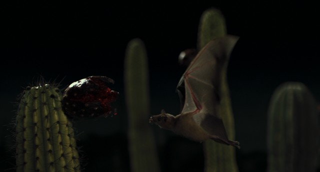 Got cactus nectar? This Mexican bat will in about a second.
