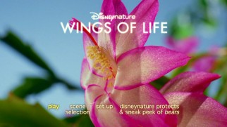 "A Meryl Steep flower opens up on the DVD menu for Disneynature's ""Wings of Life."""